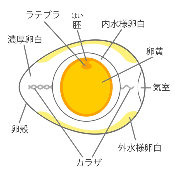 卵黄の仕組み