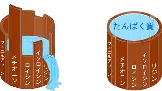 アミノ酸の桶図